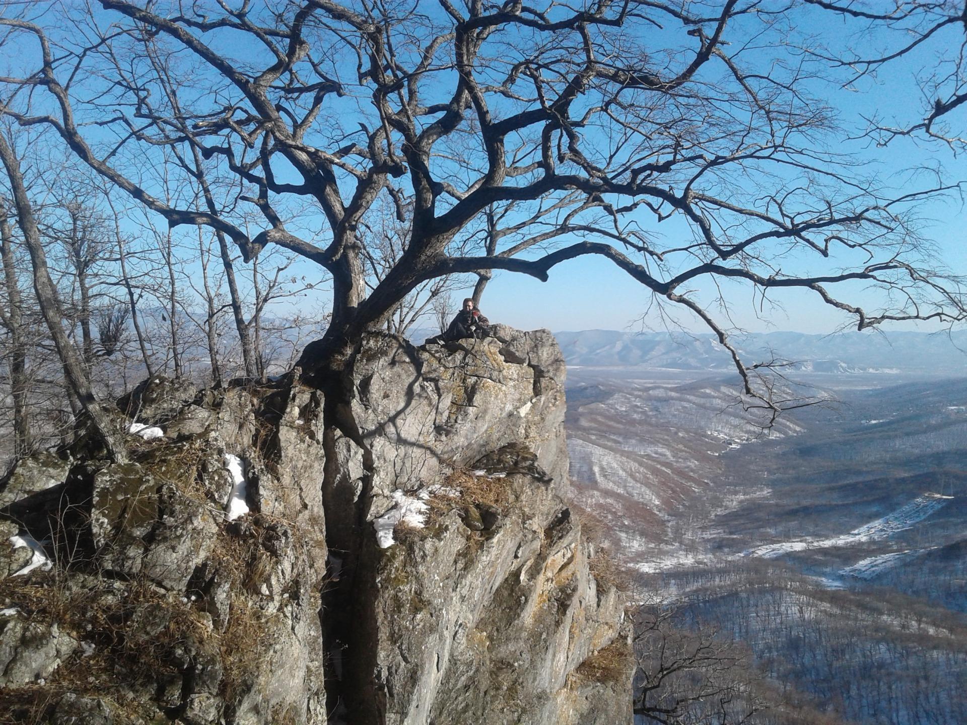 Одинокое старое дерево на скале. Фото Натальи Аграфениной