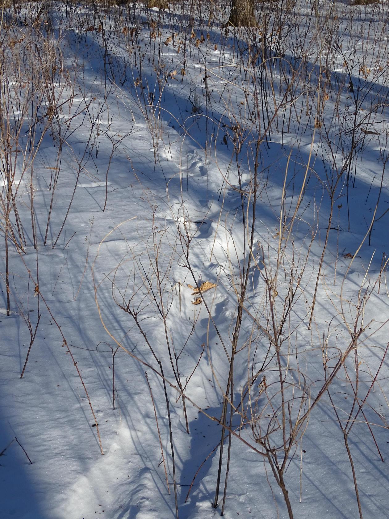 Следы тигра. Фото Игоря Жабского