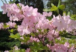 Пока цветет сакура. Ханами по-приморски